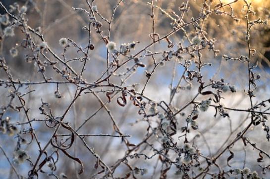 Winter Field Tapestry